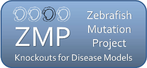 Zebrafish Mutation Project - Knockouts for Disease Models