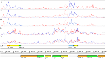 Fig 1: RNA-seq data displayed in Artemis. Mapped RNA-seq data is displayed as a plot showing sequence depth for the forward (blue) and reverse strand (red). The S. bongori genome annotation is also shown. The graphs, from the top downwards, represent the result of sequencing i) undepleted ss-cDNA ii) depleted ss-cDNA iii) depleted ss-cDNA with actinomycin D present in the reverse transcription reaction iv) ds-cDNA v) ds-cDNA with actD present in the reverse transcription reaction.