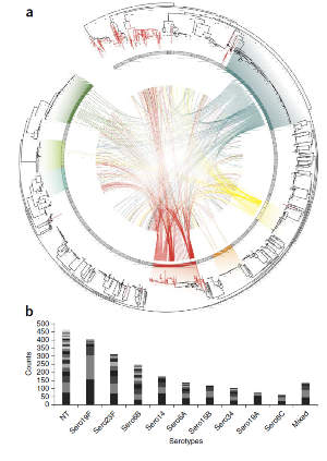 Population structure and genetic interactions of Streptococcus pneumoniae.(a) Family tree of a pneumococcal population with connections between recipients and potential donors of DNA fragments. (b) Most prevalent forms of the bacterium detected in the Maela population.