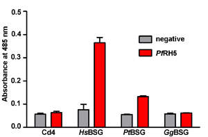 Interactions between PfRH5 and primate BSG orthologs are species specific. (A) Binding of PfRH5 to human (HsBSG), chimpanzee (PtBSG), and gorilla (GgBSG) BSG.