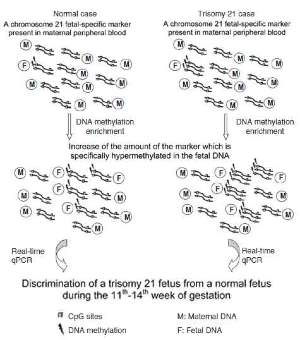 Schematic illustration of the approach towards the diagnosis of trisomy 21 cases with non-invasive prenatal diagnosis. The success of the diagnostic test relies on the identification of epigenetic markers on chromosome 21, which are hypermethylated in the fetal DNA and hypomethylated in the maternal DNA. The fetus with trisomy 21 has an extra copy of the fetal-specific methylated region compared to the normal fetus. DNA methylation enrichment will increase the amount of hypermethylated fetal DNA. Then real-time qPCR of a fetal-specific methylated region can lead to quantification of its copy numbers and therefore discrimination of trisomy 21 pregnancies from normal pregnancies.