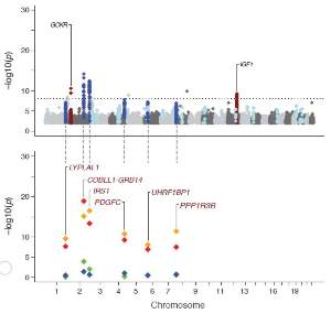 Genome-wide plot showing genetic variants associated with fasting insulin.