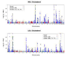 Manhattan Plots of Lipid-specific Association Results Manhattan plots highlight significant SNP associations for each trait (P< 5x10-8). Trait-specific novel loci are shown in red. Association results for known markers previously reported to be associated with lipid traits are shown in dark blue(when primary trait is the same trait) and light blue (when primary trait is a different lipid trait).