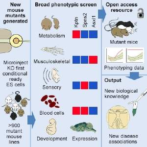 Graphical abstract of the key aims and some of the key findings from the Mouse Genetics Project.