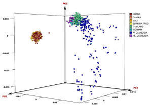 Three-dimensional plot of principal component analysis using all 825 Plasmodium falciparum samples, showing the first 3 components...