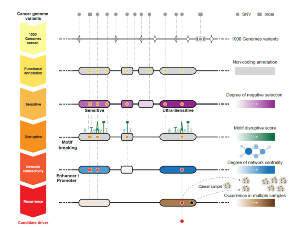 Prioritisation of candidate non-coding cancer drivers based on patterns of selection.