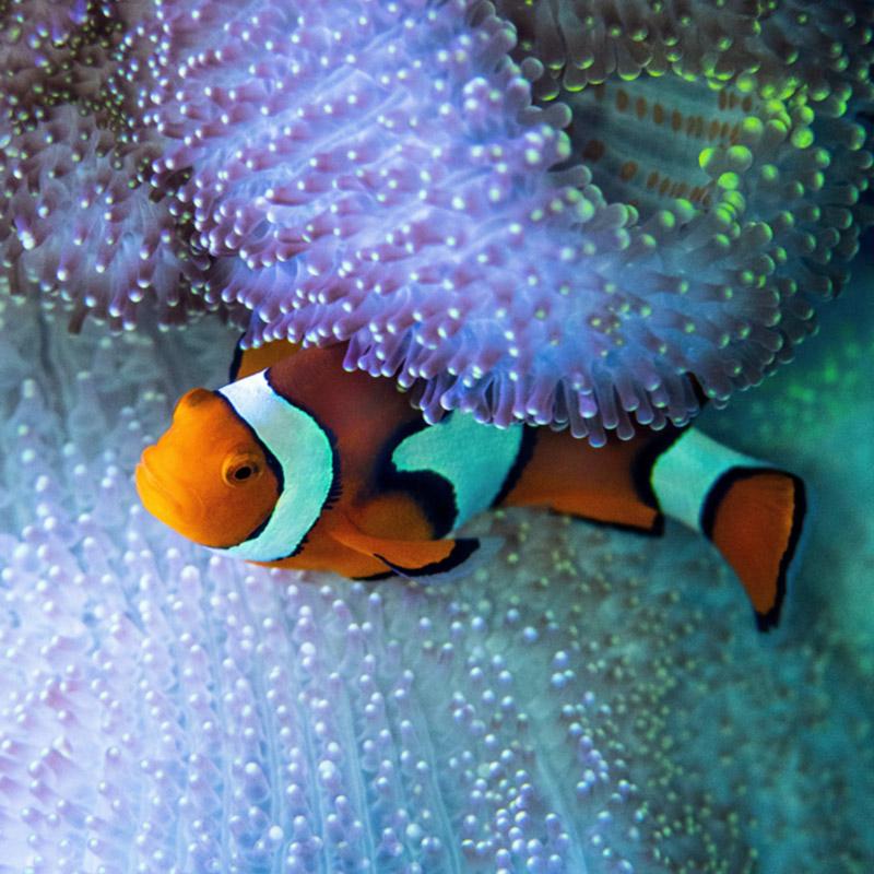 Aquatic Symbiosis Project