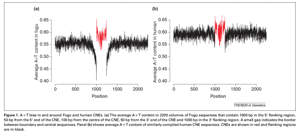 <strong>A+T bias in and around Fugu and human CNEs.</strong>Walter K, <em>et al.</em> (2005) Striking Nucleotide Frequency Pattern at the Borders of Highly Conserved Vertebrate Non-Coding Sequences. <em>Trends in Genetics</em> 21(8), 436-40. PMID: 15979195