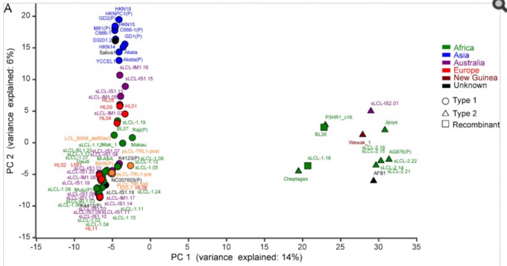 Epstein Barr Virus Principal Component Analysis (PCA)