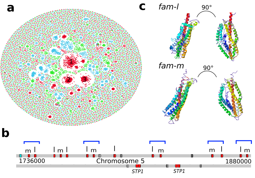 Gavin's PhD work has led to the discovery of two intriguing new gene families in <em>Plasmodium malariae</em>. They are extremely numerous with over 300 genes in each family, making up clusters labelled 1 and 2 in the gene network (a), appear to occur in doublets throughout parts of the malaria genome (b), and are predicted to adopt a structure that is similar to another protein, Rh5, that is a current vaccine-target in malaria (c).