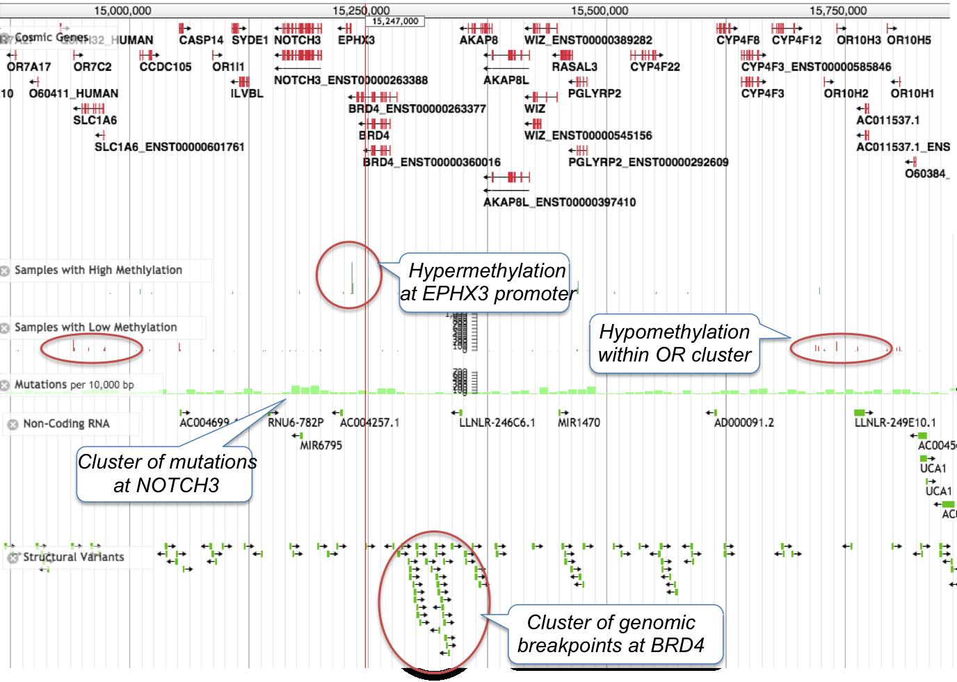 Jbrowse Genomic View